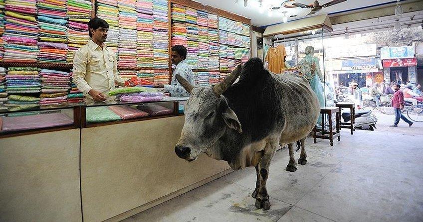 Hindistanda inek kaçakçısına linç girişimi