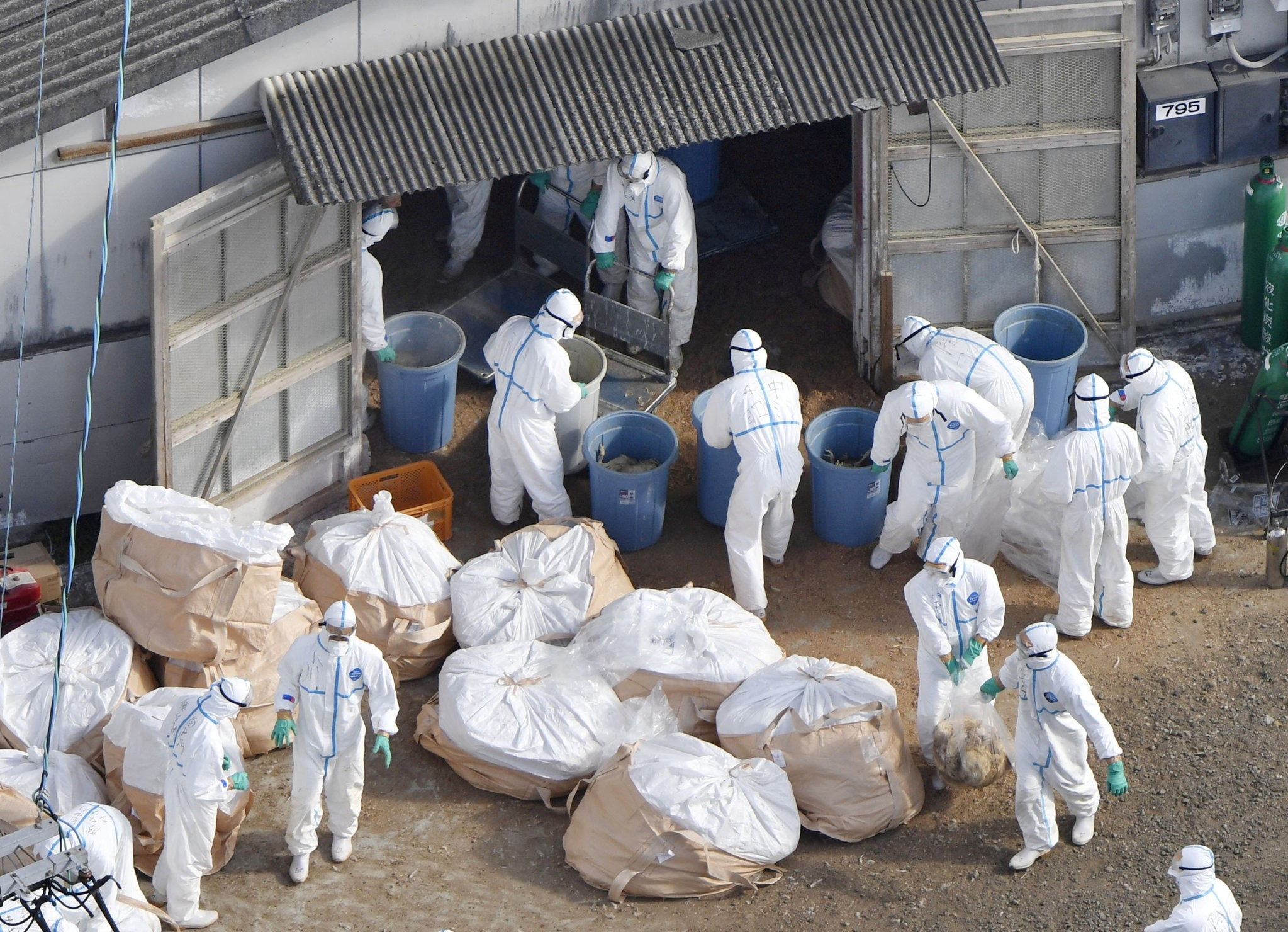 Work begins at a poultry farm in Kawaminami, Miyazaki Prefecture, southwestern Japan to bury chickens culled. (REUTERS PHOTO)