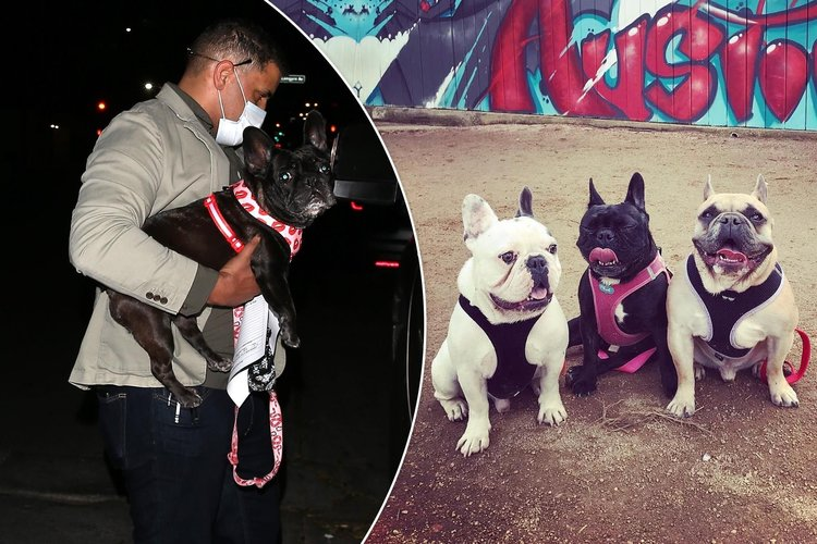 Silahlı saldırıyla Lady Gaga'nın köpeklerini çaldılar