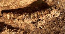 890 milyon yıl öncesine ait fosil