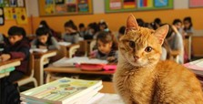 Tombi 'the class cat' to be reunited with classmates