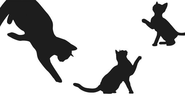 Dünya kedilerinin başkenti İstanbul