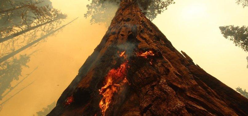 FIRE CREEPS CLOSER TO CALIFORNIAS ANCIENT SEQUOIAS