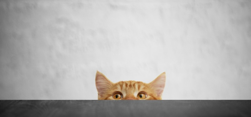 CATS RESPOND TO SOUND OF THEIR NAME, STUDY FINDS