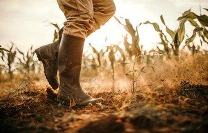 TARSİMden 214 milyon TL kuraklık ödemesi