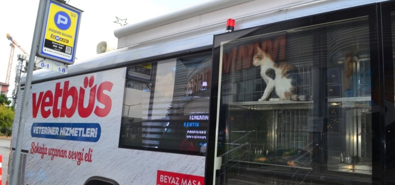 MOBILE VET CLINICS HIT THE ROAD IN ISTANBUL TO TREAT STRAY ANIMALS
