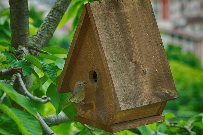 A wooden bird nest in Artvin, Turkey. (AA Photo)