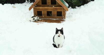 pAs Istanbul have experienced the coldest days for almost 10 years, municipalities have already started to launch campaigns to protect the city's famous stray cats from freezing weather.br /