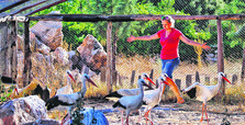 Come to ecological farms to get away from stressful city life