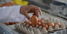 South Korea apologizes over tainted egg scandal