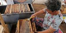 'Queen of beekeepers' on hunt for best honey