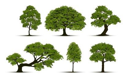 Ağaçzenginleri