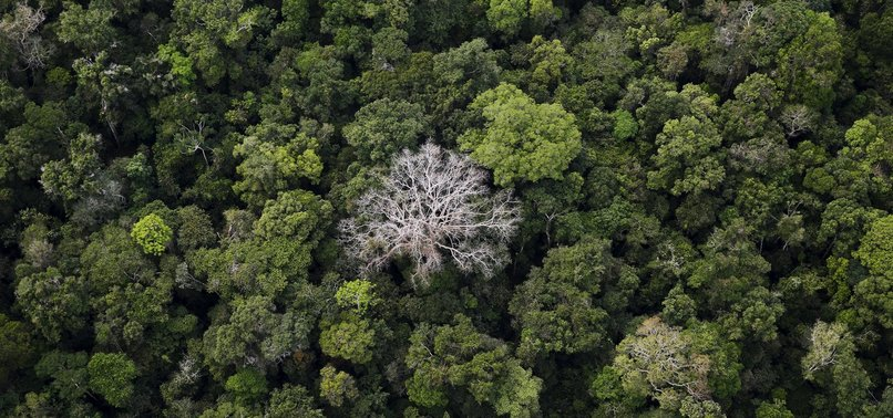 DEFORESTATION PREVENTION KEY TO FIGHT CLIMATE CHANGE