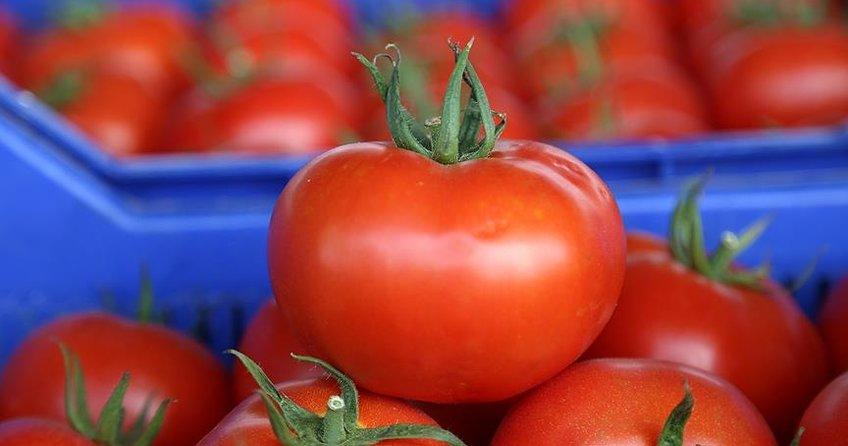 Antalyadan 46 ülkeye domates ihracatı yapılıyor