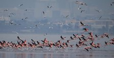 Bird watchers gather in biodiversity-rich Gediz Delta to join midwinter waterfowl count