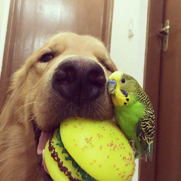 Hayvanların Şaşırtan Dostlukları..