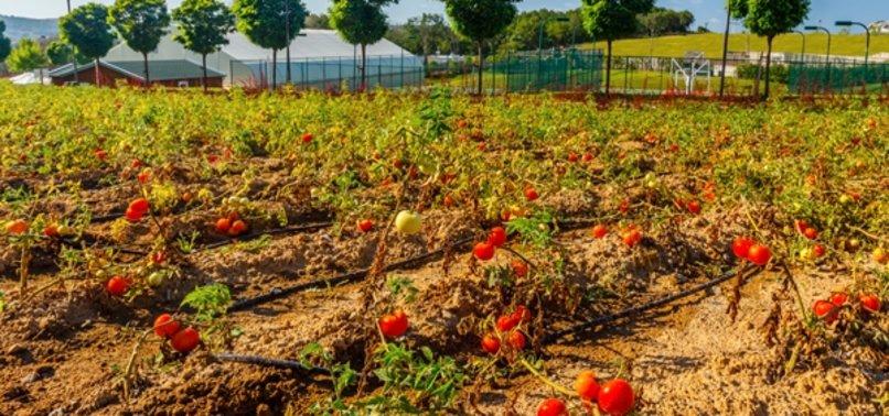 TURKEY MEETS 7% OF EUS ORGANIC AGRIPRODUCT IMPORTS