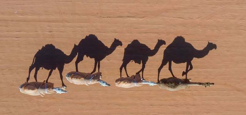 AUSTRALIA TO CULL 10,000 CAMELS FOR DRINKING TOO MUCH WATER