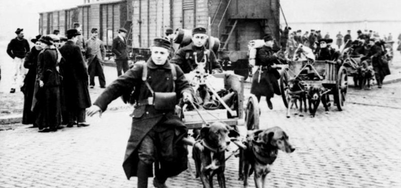 ANIMALS OF WWI: SERVED BY THE MILLIONS, DIED BY THE MILLIONS