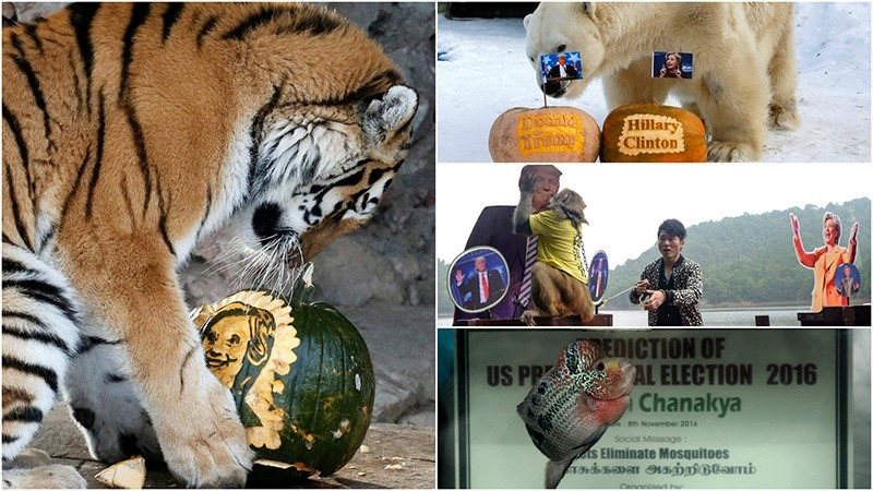 Meet the mystical animals predicting the next US president: Yunona (L), Felix (top right), Geda (center) and Chanakya II (bottom right).