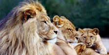 Sleepy lions, empty bars, lost jobs: A world without tourism