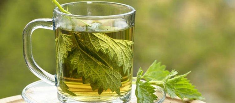 Hangi bitki hangi hastalığa iyi gelir?...