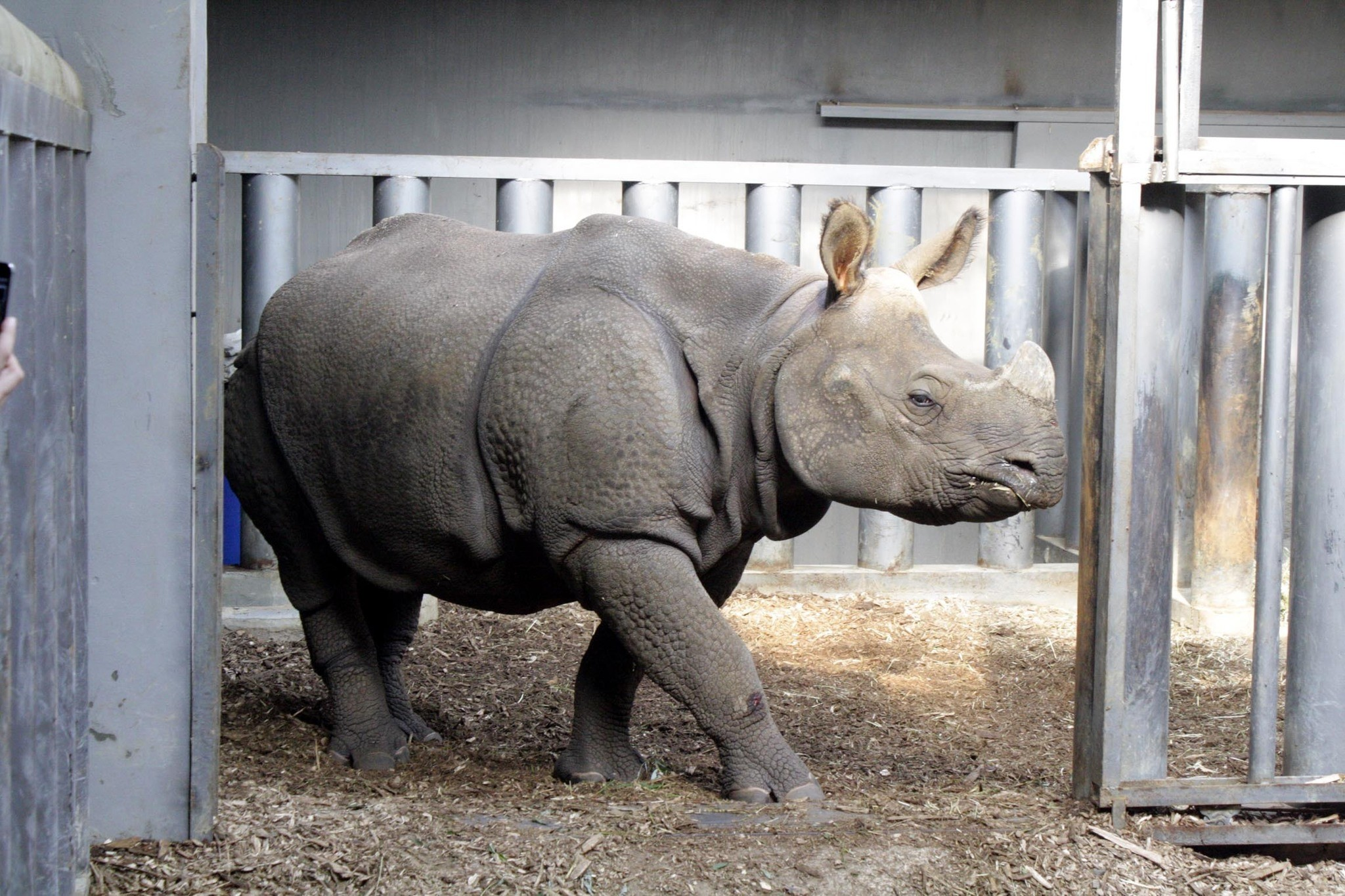 Rhino Komala poses for the camera. (DHA Photo)
