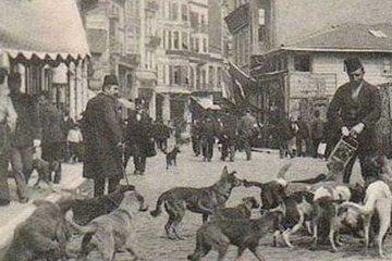 Osmanlı'da hayvan sevgisinin bir mesleğe tezahürü: Mancacılık