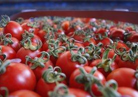 Rusya'dan önemli domates açıklaması!