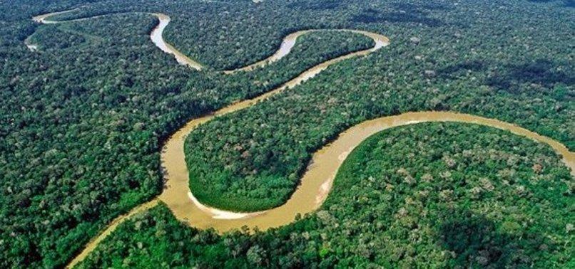 5 Hutan yang Paling Berbahaya di Dunia