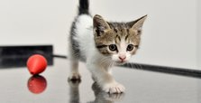 Kitten travels 700 km in car engine