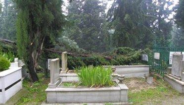 Mezarlıktaki ağaç, ot vb. bitkileri kesmek caiz midir?