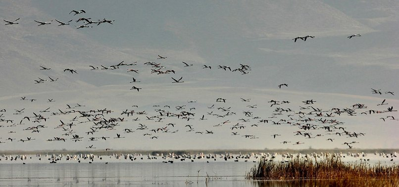 WORLD MIGRATORY BIRD DAY BEING OBSERVED