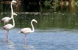 Flamingos offer a dazzling visual feast  in Acıgöl lake located in Turkey's Afyonkarahisar
