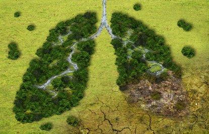 İklimvebiyoçeşitlilikiçinçağrı