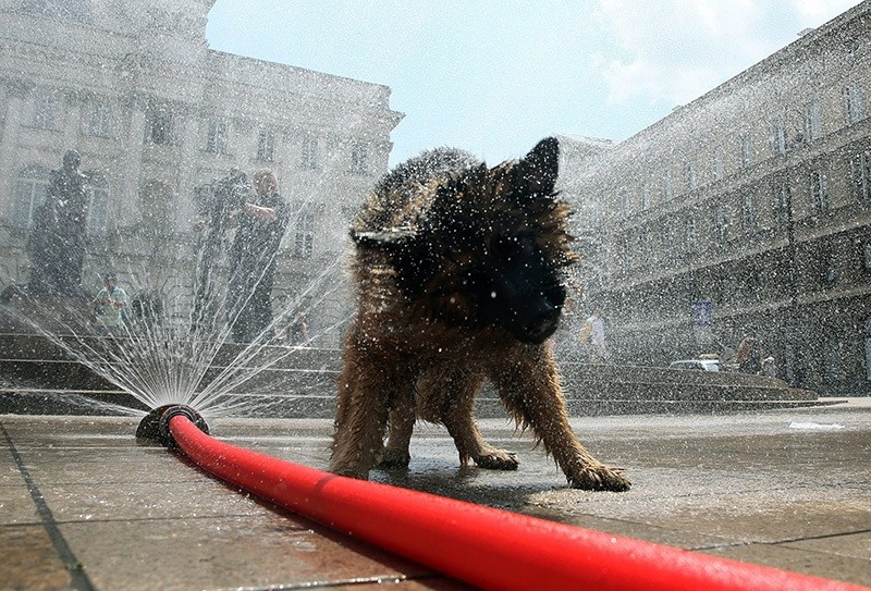 A dog cools itself off with water from a hose on a hot day in Warsaw, Poland, 23 June 2016. (EPA Photo)