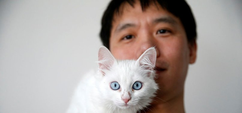 CHINESE MAN TRAVELS TO TURKEY TO ADOPT RARE VAN CAT