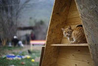 Love has no boundary when it comes to the affection Turkish people show street cats and local volunteers are taking initiative to conjure up new ways to protect Turkey's feral cat...