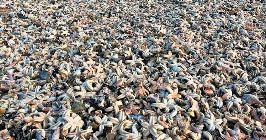 İngiltere sahillerinde kıyamet manzarası