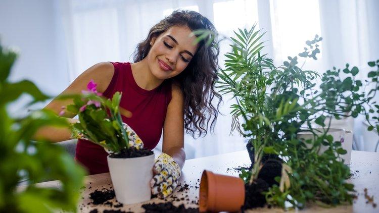 Evinizin havasını temizleyen 8 bitki çeşidi
