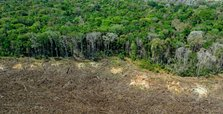 Deforestation in Amazon rainforest exceeds 11,000 km²