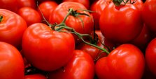 Turkey objects to Russia's import quota on tomatoes