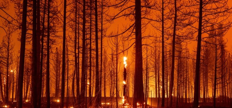 WILDFIRES RAVAGING FORESTLANDS IN MANY PARTS OF GLOBE