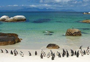 Cape Town'da neler yapılır?