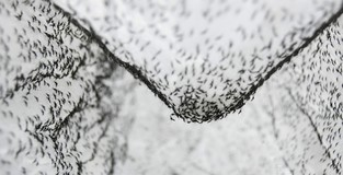 New technique knocks out disease-carrying mosquitoes