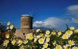 Datça ready to host its annual Almond Blossom Festival