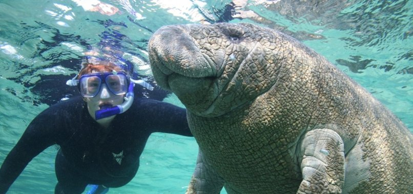 FLORIDA BREAKS ANNUAL MANATEE DEATH RECORD IN FIRST 6 MONTHS