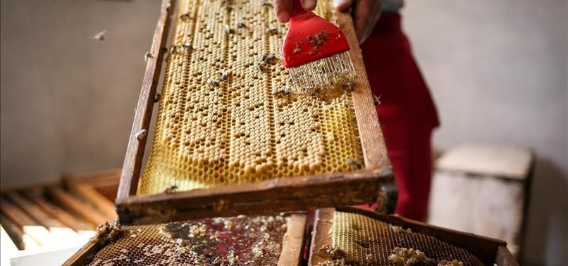 EUROPEAN BANK TO LOAN TURKISH HONEY PRODUCER