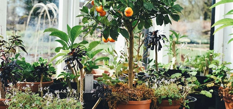HORTICULTURAL THERAPY: A GREEN GATEWAY TO WELLNESS